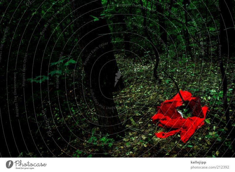 jeanny Natur Baum rot Wald dunkel Traurigkeit Landschaft Umwelt Bekleidung geheimnisvoll Stoff gruselig Gewalt Jagd Märchen unheimlich