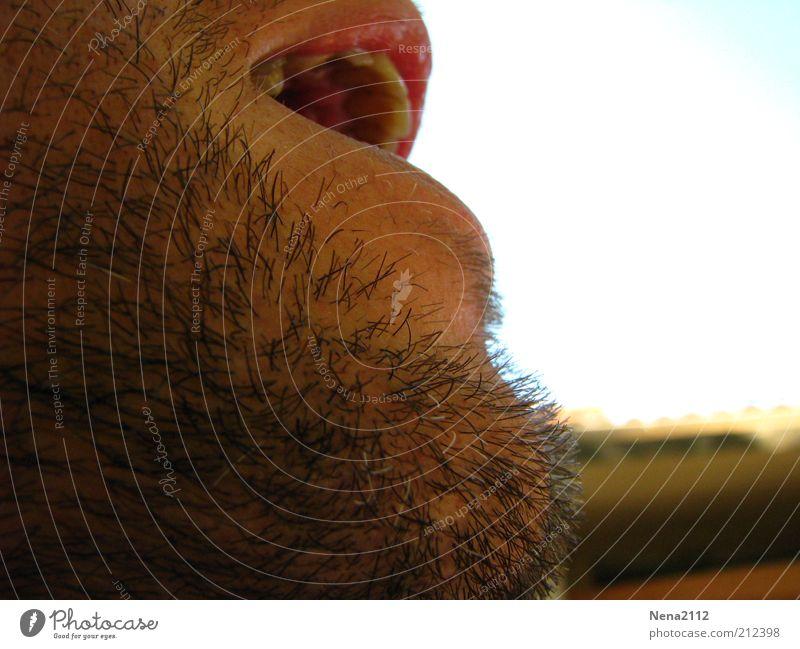 AAAAhhhhrrrg.... Mann alt Erwachsene sprechen Junger Mann Mund maskulin Wachstum Zähne Lippen schreien Bart atmen schwarzhaarig Gesicht Barthaare