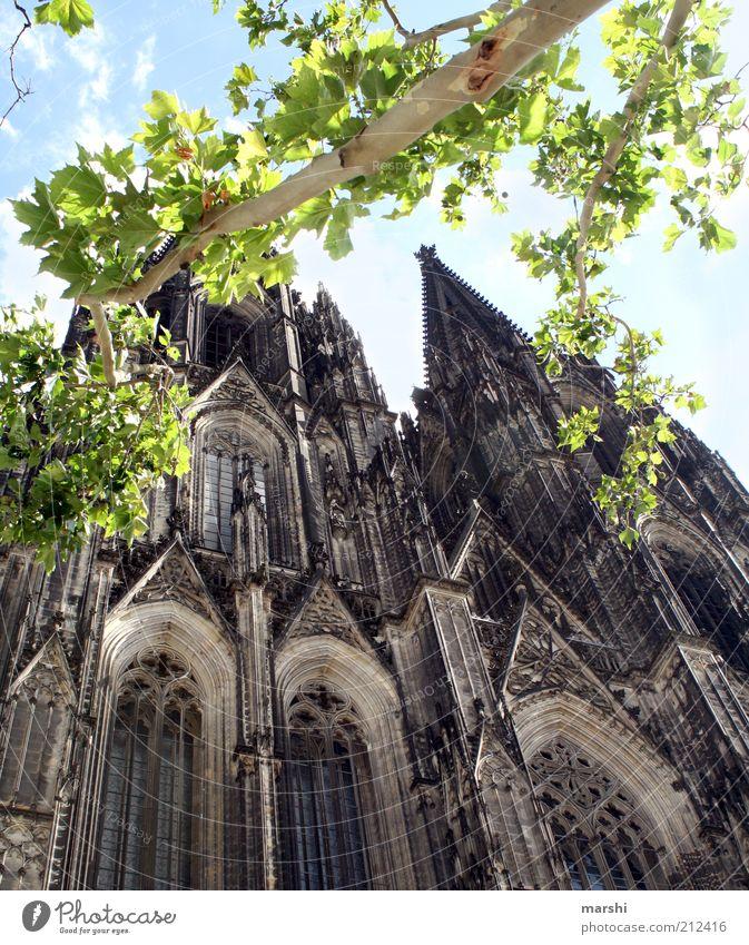 Jede Kölsche hätt och en stöck vum Dom em Hetze. alt Himmel Baum Sommer Ferien & Urlaub & Reisen Blatt Religion & Glaube Architektur groß Ausflug Perspektive