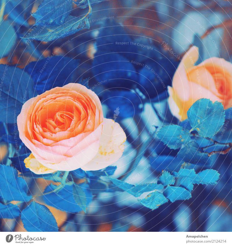 ::17-24:: Glück schön Gesundheit Wellness Wohlgefühl Zufriedenheit Sinnesorgane Erholung Feste & Feiern Valentinstag Muttertag Hochzeit Geburtstag Trauerfeier