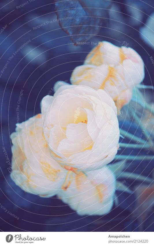 ::17-23:: Natur Pflanze Sommer Farbe schön Blume Erholung ruhig Leben Umwelt Blüte Frühling Liebe Glück Garten Tod