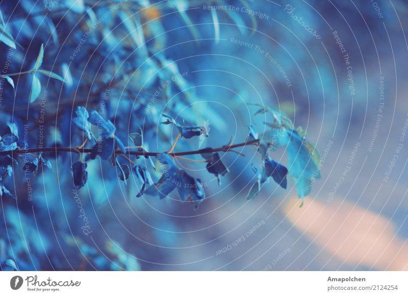 ::17-36:: Umwelt Natur Landschaft Pflanze Tier Urelemente Frühling Sommer Herbst Winter Klima Klimawandel Wetter Eis Frost Sträucher Blatt Garten Park Stadt