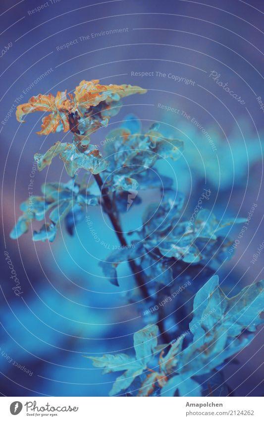 ::17-33:: Umwelt Natur Pflanze Tier Urelemente Sommer Herbst Winter Klima schlechtes Wetter Unwetter Eis Frost Sträucher Blatt Grünpflanze Garten Park Wiese