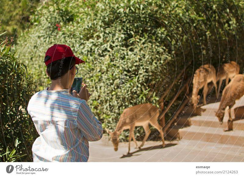 Kind in der Natur Ferien & Urlaub & Reisen Sommer grün Tier Tierjunges Umwelt Lifestyle Junge Tourismus Kindheit Abenteuer Tiergruppe beobachten 8-13 Jahre