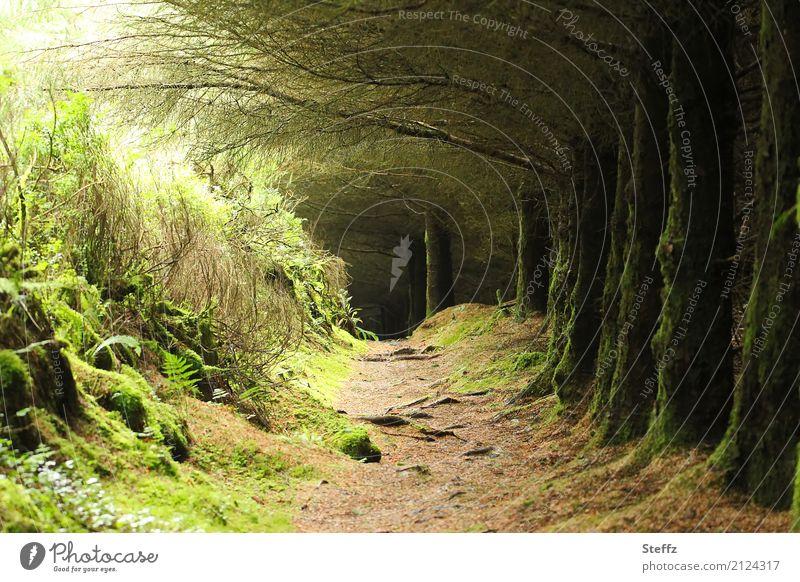Feenwald in Irland Märchenwald Wald märchenhaft Stille im Wald Licht im Wald geheimnisvoll Nordeuropa nordische Romantik Ruhe nordische Natur mysteriös