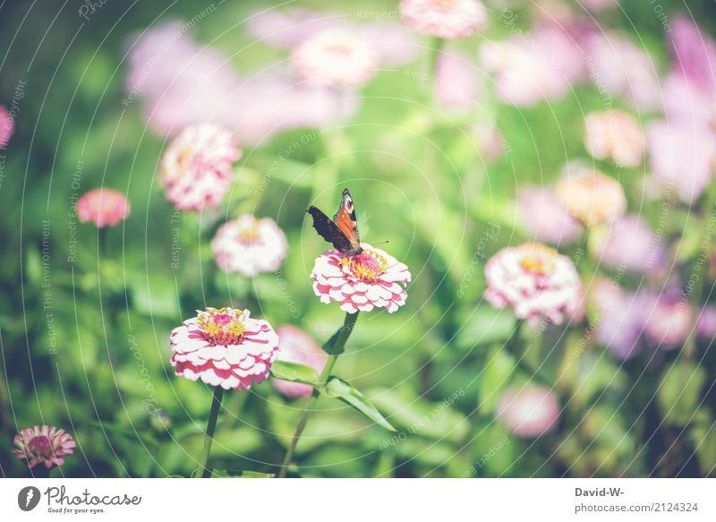 Im Blumenfeld Umwelt Natur Landschaft Pflanze Tier Luft Frühling Sommer Blatt Blüte Grünpflanze Garten Park Wiese Nutztier Schmetterling 1 Blühend Zufriedenheit