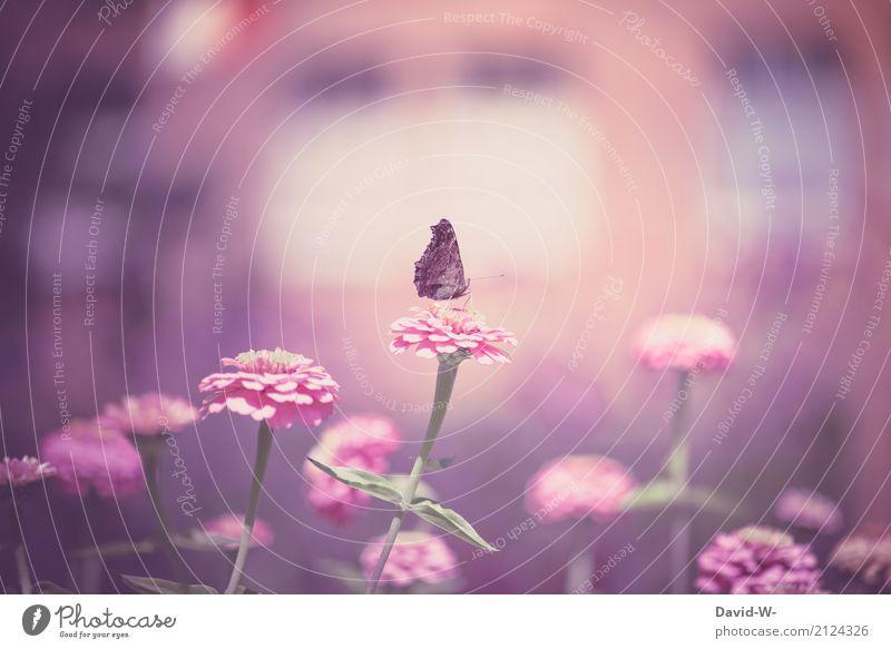 mädchenhaft Natur Pflanze Sommer Sonne Landschaft Blume Tier Umwelt Blüte Frühling Kunst Garten rosa Park Wetter genießen