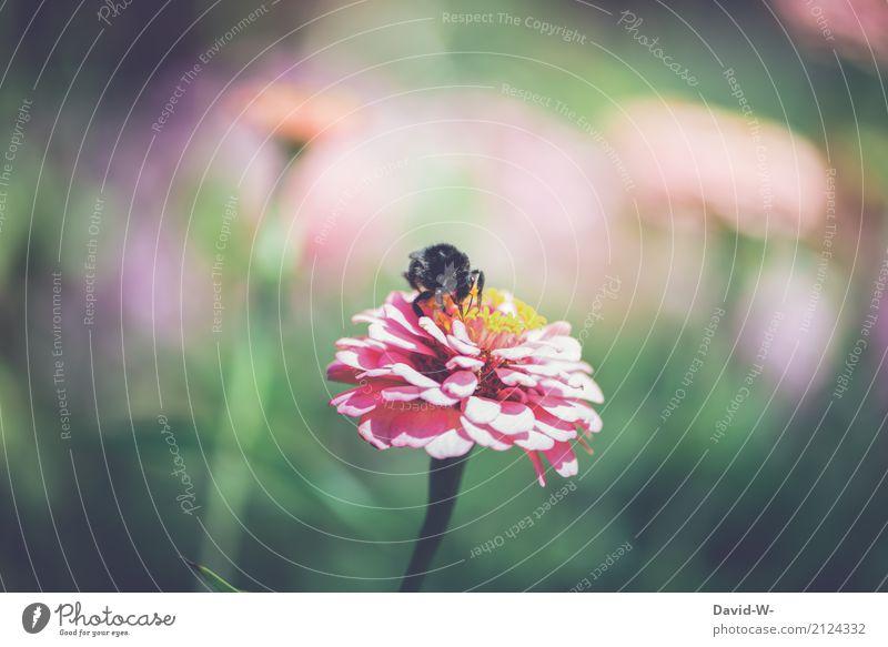 untersuchen Umwelt Natur Landschaft Pflanze Tier Luft Frühling Sommer Klima Schönes Wetter Unwetter Blume Blatt Grünpflanze Garten Park Wiese Nutztier