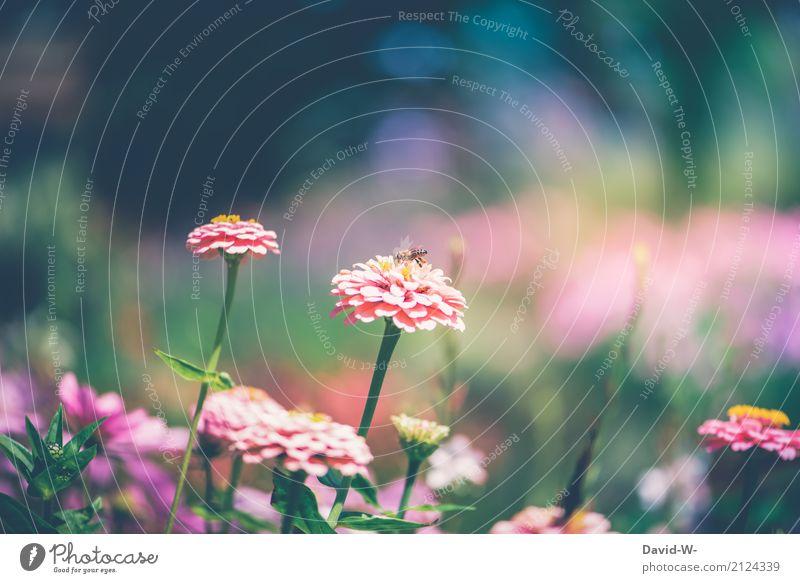 kleine Biene Kunst Umwelt Natur Landschaft Pflanze Tier Sonne Frühling Sommer Klima Klimawandel Wetter Schönes Wetter Unwetter Wärme Blume Blatt Blüte