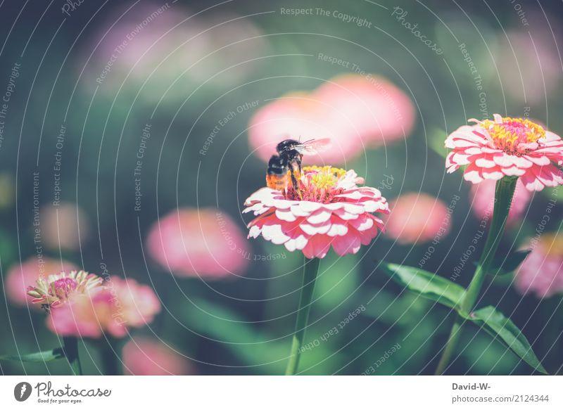 Hummel Abflug Umwelt Natur Landschaft Pflanze Tier Sonne Frühling Sommer Klima Klimawandel Wetter Schönes Wetter Wärme Blume Blatt Blüte Grünpflanze Nutzpflanze