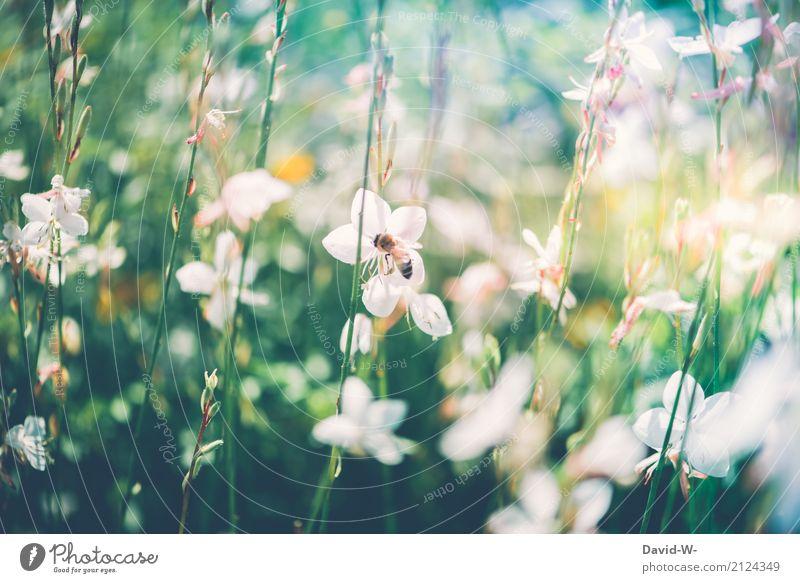 Biene Maja Natur Pflanze Sommer schön Sonne Landschaft Blume Blatt Umwelt Blüte Frühling Kunst Garten fliegen Park Wetter