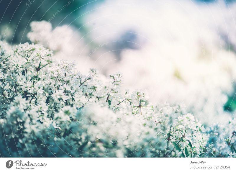 ein schöner Sommertag Natur Pflanze Sonne Landschaft Blume Wärme Umwelt Blüte Frühling Wiese Garten träumen Park Wetter