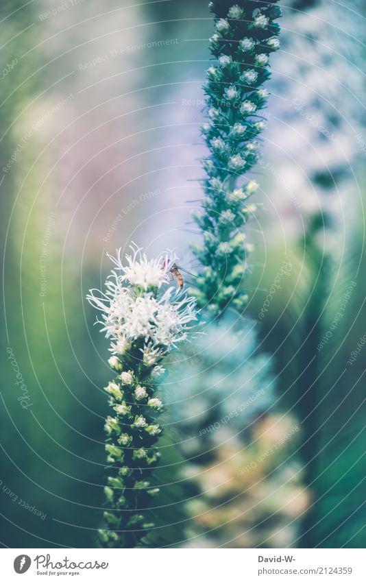 gut versteckt Natur Pflanze Sommer Sonne Landschaft Blume Blatt Tier Wärme Umwelt Blüte Frühling Wiese Kunst Erde Park