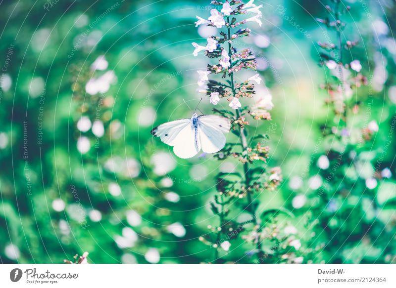 grün und weiß Umwelt Natur Landschaft Pflanze Tier Luft Frühling Sommer Klima Klimawandel Wetter Schönes Wetter Blume Blatt Blüte Grünpflanze Wildpflanze Garten