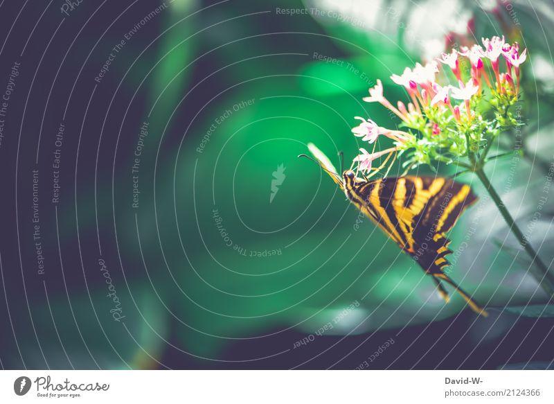 kleiner Drache Kunst Umwelt Natur Landschaft Pflanze Tier Sonnenlicht Frühling Sommer Klima Wetter Schönes Wetter Wärme Blume Blüte Garten Park Wald Nutztier