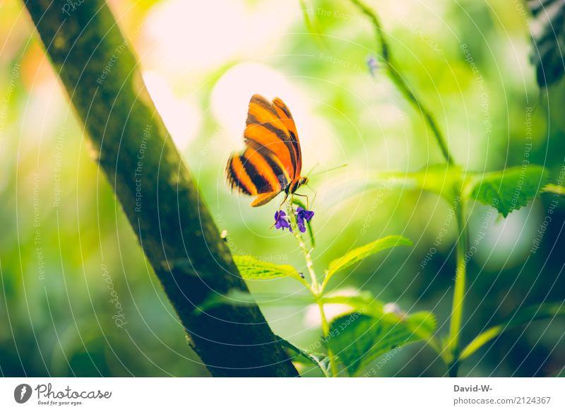 sitze auf der Spitze Kunst Kunstwerk Gemälde Umwelt Natur Landschaft Pflanze Tier Sonne Sonnenlicht Frühling Sommer Blume Blatt Blüte Wildpflanze Park Wald