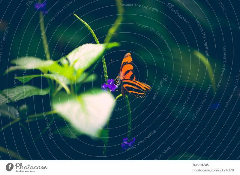 strahlend Natur Pflanze Sommer schön Landschaft Blatt Tier Wald Umwelt Blüte Frühling Kunst orange leuchten Wetter Schönes Wetter