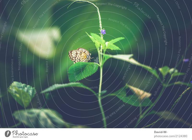 Grünes Plätzchen Natur Pflanze Sommer schön grün Landschaft Blatt Tier Wald Umwelt Blüte Frühling Garten Park Wetter Luft