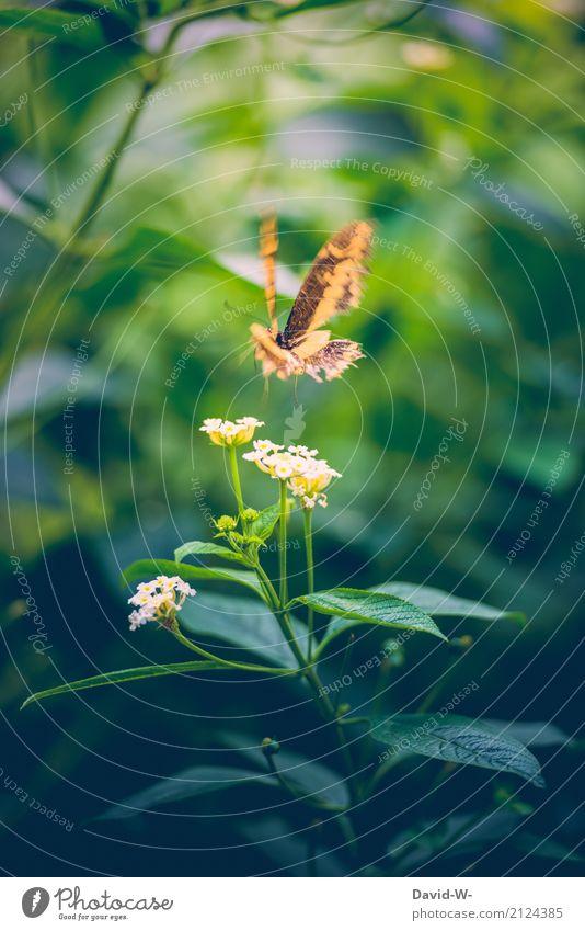 Aaaachtung ich komme Kunst Umwelt Natur Landschaft Pflanze Tier Luft Sonnenlicht Frühling Sommer Blume Blüte Grünpflanze Garten Park Nutztier Schmetterling 1