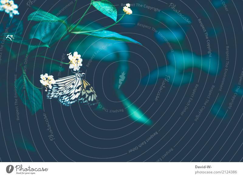 Lepidoptera Natur Pflanze Sommer Landschaft Blatt Tier Wald Umwelt Blüte Herbst Kunst Garten Park Schönes Wetter Flügel beobachten