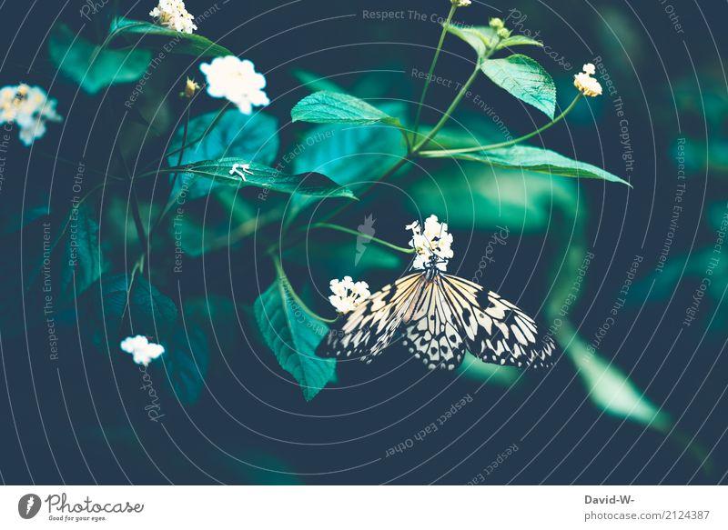 sich öffnen Natur Pflanze Sommer schön Baum Landschaft Blume Erholung Tier Umwelt Blüte Frühling Gras Kunst außergewöhnlich Wetter