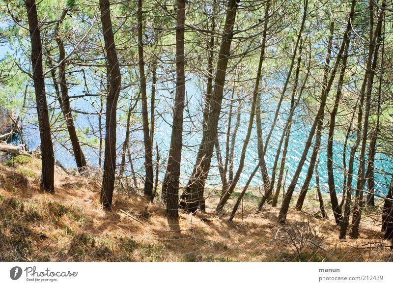 am Kiefernpfad Ferien & Urlaub & Reisen Ausflug Natur Landschaft Baum Wald Hügel Felsen Küste Bucht Meer Klippe außergewöhnlich schön wild Fernweh Farbfoto