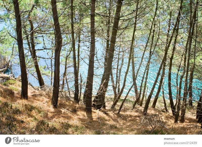 am Kiefernpfad Natur Wasser schön Baum Ferien & Urlaub & Reisen Meer Wald Landschaft Küste Felsen Ausflug wild außergewöhnlich Hügel Bucht Baumstamm