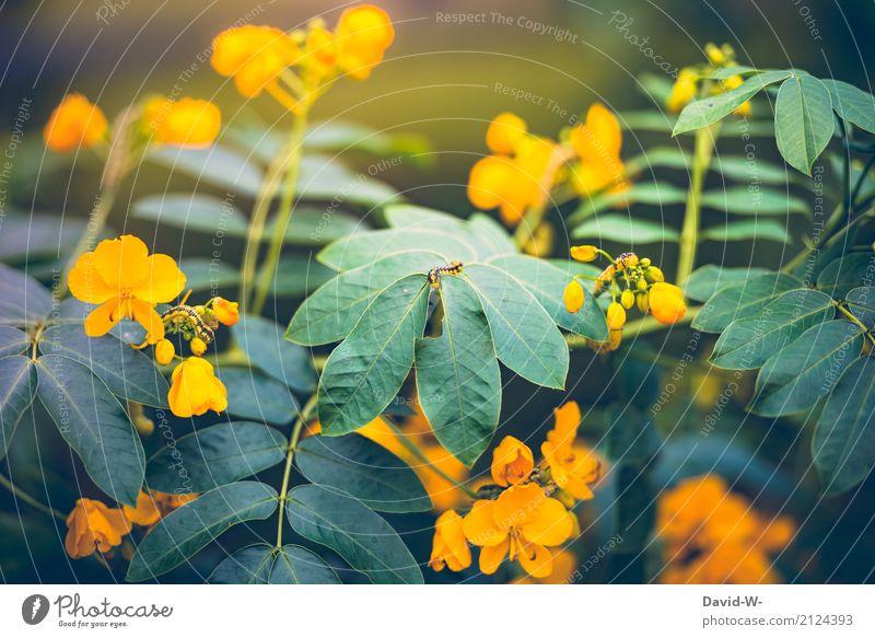 Ton im Ton Kunst Umwelt Natur Landschaft Pflanze Tier Sonnenlicht Frühling Sommer Klima Klimawandel Wetter Schönes Wetter Sträucher Blatt Blüte Grünpflanze