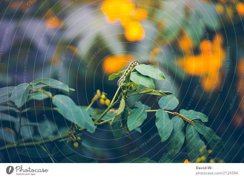 Klettermax Umwelt Natur Landschaft Pflanze Tier Frühling Sommer Klima Wetter Schönes Wetter Baum Blume Sträucher Blatt Blüte Grünpflanze Nutzpflanze Wildpflanze