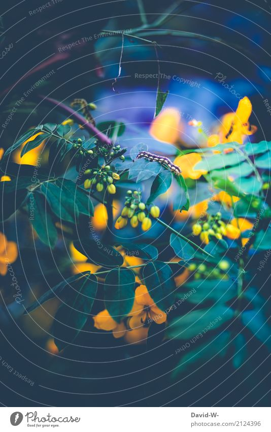 mystischer Raupenabend Natur Pflanze Sommer grün Landschaft Blatt Tier Wald Umwelt gelb Blüte Frühling Kunst Park leuchten Schönes Wetter