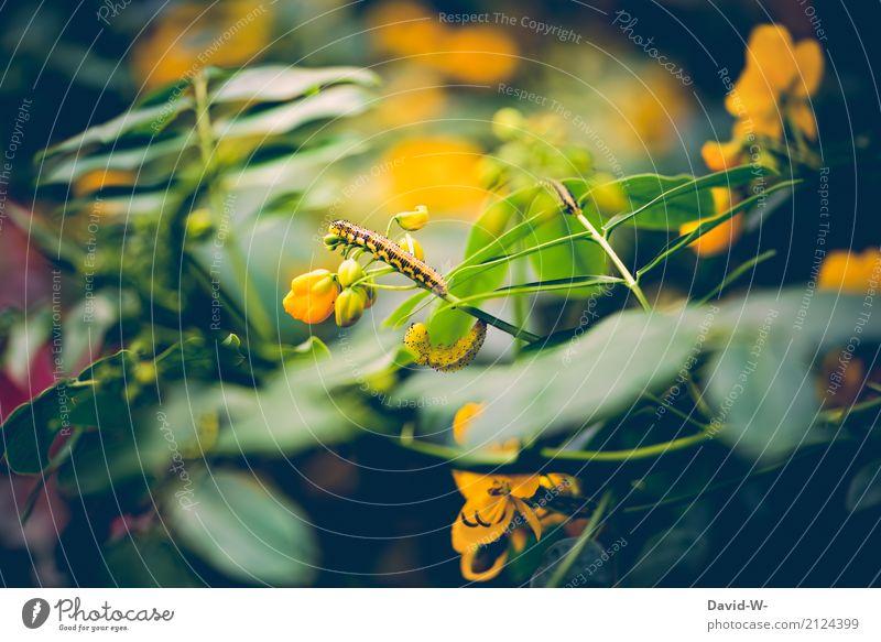 erklimmen Kunst Umwelt Natur Landschaft Pflanze Tier Sonnenlicht Frühling Sommer Blume Blatt Blüte Grünpflanze Garten Wiese Wald Urwald Nutztier Wildtier Herde