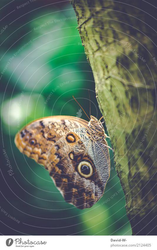 Muster Kunst Künstler Kunstwerk Umwelt Natur Landschaft Tier Luft Sonnenlicht Frühling Sommer Klima Klimawandel Schönes Wetter Pflanze Baum Wald Urwald Nutztier