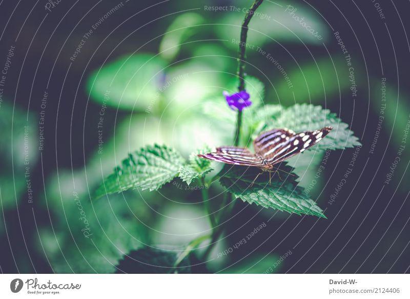 zartes Etwas Umwelt Natur Landschaft Pflanze Tier Sonnenlicht Frühling Sommer Klima Klimawandel Wetter Schönes Wetter Blatt Blüte Wildpflanze Garten Park Wald