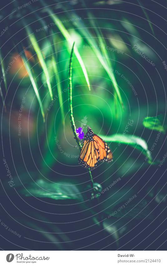 die Blüte gehört mir Natur Pflanze Sommer schön Landschaft Tier Wald Umwelt Frühling Kunst orange Luft Sträucher Schönes Wetter Flügel Klima