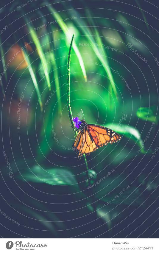 Licht im Dunkel Natur Pflanze Sommer schön Landschaft Blatt Tier Wald Umwelt Blüte Frühling Herbst klein Kunst orange träumen
