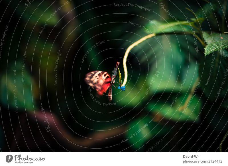 roter Schmetterling Natur Pflanze Sommer schön Landschaft Blatt Tier Wald Umwelt Blüte Frühling Herbst Wiese klein Kunst Garten