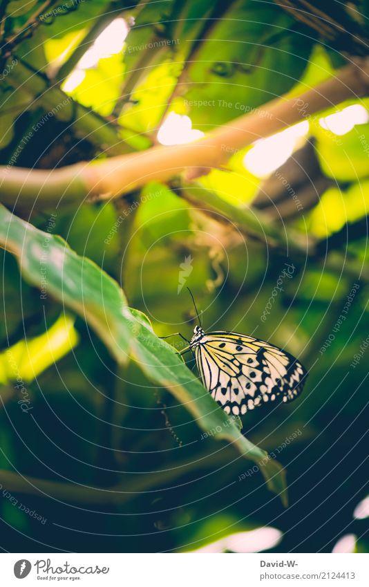 mit Steigung Natur Pflanze Sommer schön Sonne Landschaft Blatt Tier Wald Umwelt Frühling Kunst Park Wetter sitzen Schönes Wetter