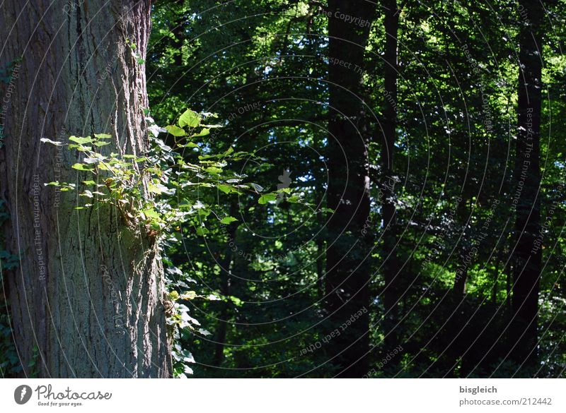 Im Wald Natur Baum grün Pflanze Sommer ruhig Blatt Wald Erholung Holz Baumstamm Zweige u. Äste