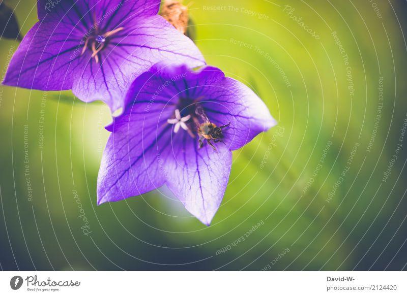 Blütenwanderung Natur Pflanze Sommer schön Landschaft Blume Blatt Tier Wärme Umwelt Frühling Kunst Garten Park Wetter
