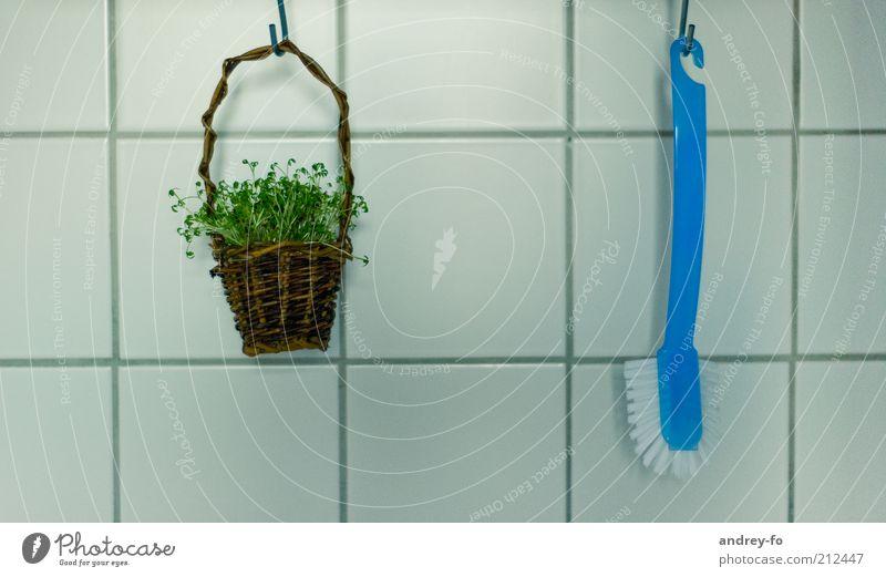 ...Einblick in die Küche Häusliches Leben Bürste Pflanze Gras Kresse Dekoration & Verzierung Körbchen Holz dünn blau braun grün hängend Fliesen u. Kacheln