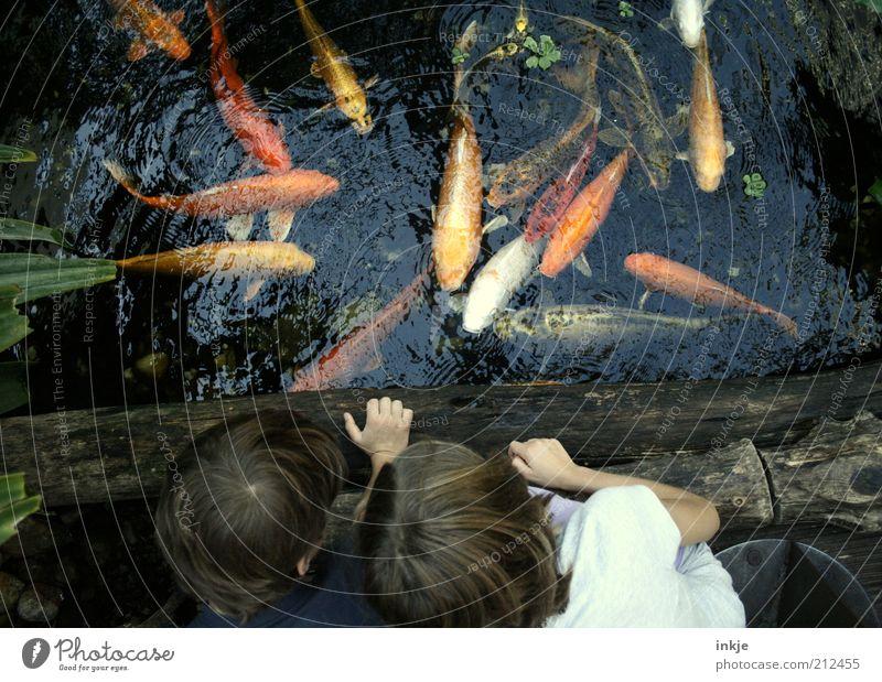 goldfishing Natur Wasser Mädchen Sommer Leben Umwelt Junge Garten See Schwimmen & Baden Ausflug Fisch außergewöhnlich Tiergruppe beobachten Neugier