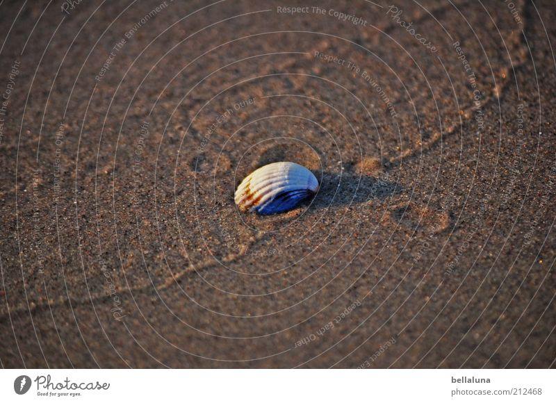 Es ist angerichtet... Natur schön Ferien & Urlaub & Reisen Sommer Meer Strand Tier Umwelt Sand Küste Wetter Wildtier nass Schönes Wetter Ostsee feucht
