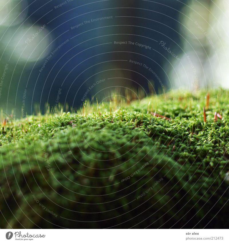 moosgrün Natur weiß grün blau Pflanze Sommer Umwelt nass Wachstum weich natürlich Moos Photosynthese Biotop Moosteppich