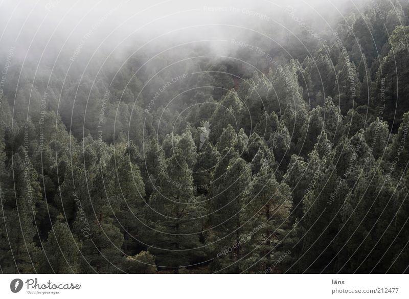 Wald Landschaft Pflanze Nebel Berge u. Gebirge außergewöhnlich Natur spukhaft Verhext Farbfoto Gedeckte Farben Außenaufnahme Menschenleer Textfreiraum oben