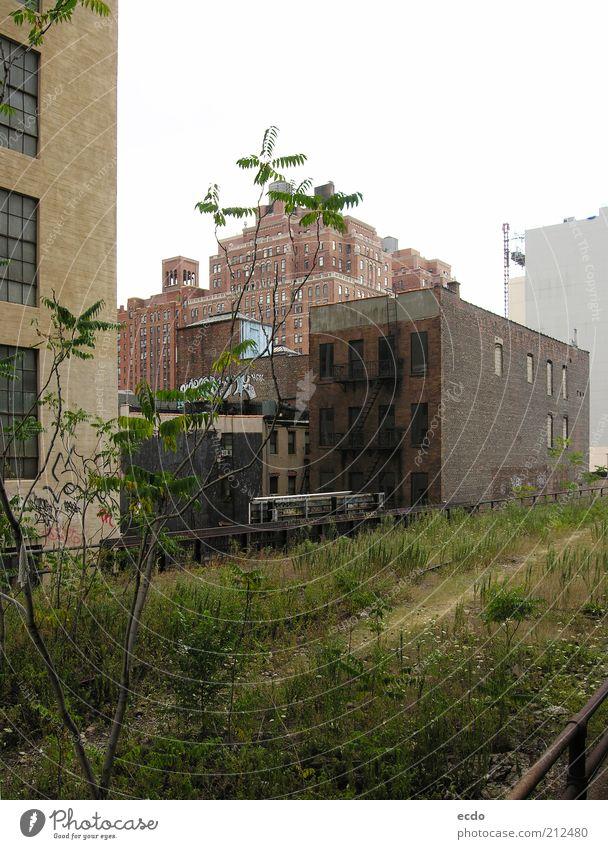 Highline Sommer schlechtes Wetter Pflanze Baum Gras New York City USA Menschenleer Hochhaus Park Brücke hoch kalt braun grau grün weiß Überraschung Angst