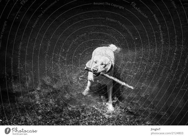 wasserspiele Natur Hund Wasser weiß Landschaft Tier Freude schwarz Umwelt Spielen grau Lebensfreude nass rein Fell Tiergesicht