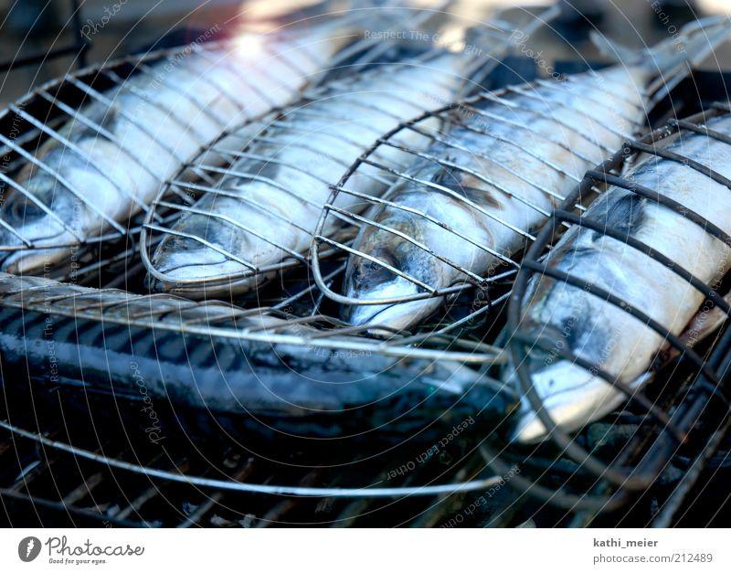 5 Makrelen aufm Grill Lebensmittel Fisch Ernährung Mittagessen Abendessen Bioprodukte Sommer Feste & Feiern Grillen Feuer Wärme Nutztier Totes Tier lecker blau