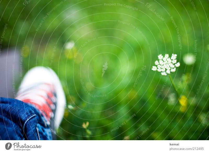 Schuh im Grünen Umwelt Natur Pflanze Sommer Klima Schönes Wetter Wärme Blume Gras Blüte Grünpflanze Wildpflanze Gewöhnliche Schafgarbe Garten Park Wiese