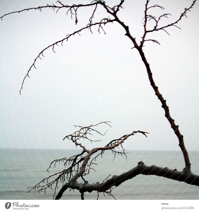 Scuse Me While I Kiss The Sky Himmel Meer Einsamkeit Strand dunkel Küste Tod Horizont Nebel trist hoch Ast Ostsee Zweig Denkmal bizarr