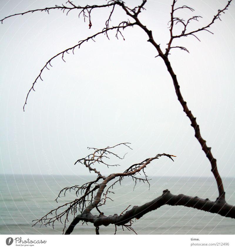 Scuse Me While I Kiss The Sky Strand Meer Himmel Horizont schlechtes Wetter Nebel Küste Ostsee Denkmal dunkel hoch Tod Einsamkeit Ast verdreht verzweigt Zweig